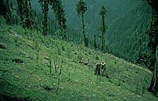 Konsekvenser av tap av biologisk mangfold